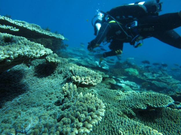 Acropora research at the Abrolhos Islands