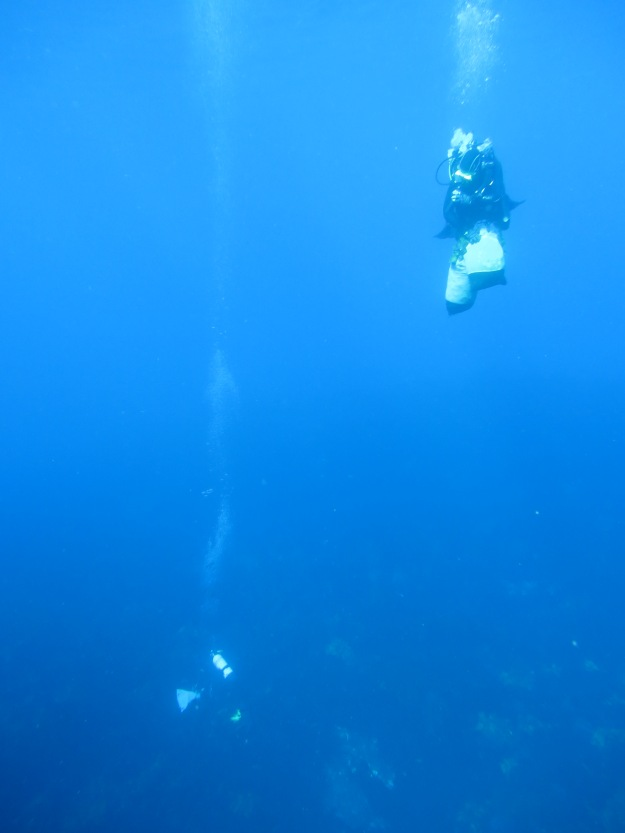 Kelp research at the Abrolhos Islands
